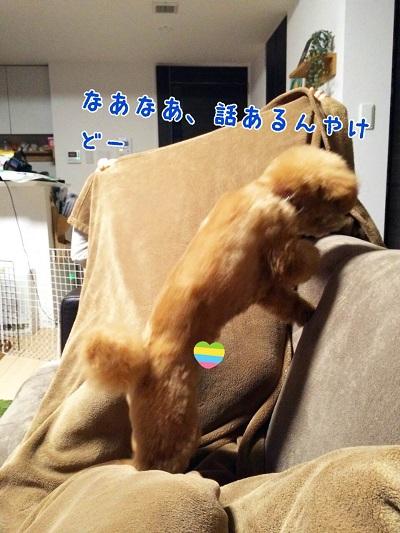 photo7-5.jpg