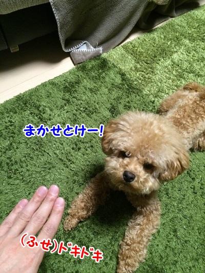 photo8-5.jpg