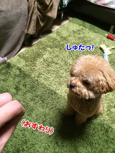 photo8-6.jpg