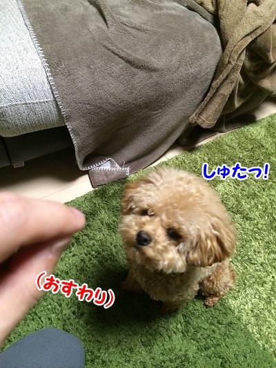photo8-8.jpg
