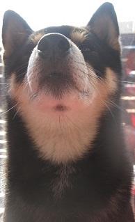 016_2013122910455454e犬