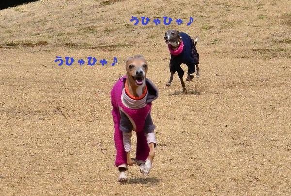 s-20140309_13562D7t.jpg