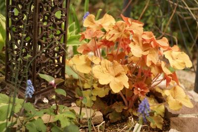0426-7カラーリーフ花壇1