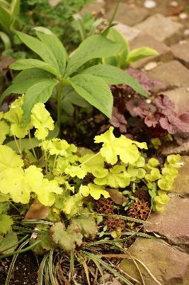 0426-9カラーリーフ花壇3