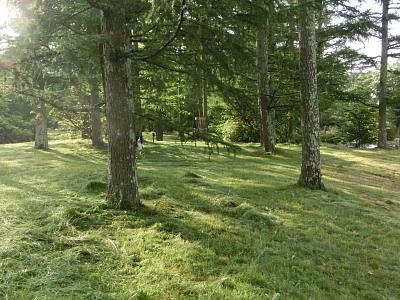 清里の森2