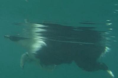 0727パル水中カメラ1