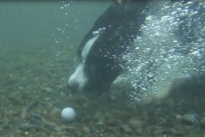 0727パル水中カメラ2