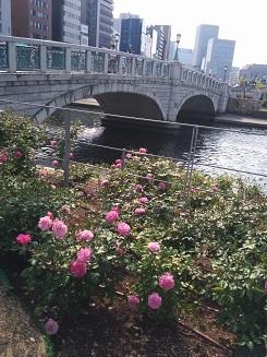 rosebridge