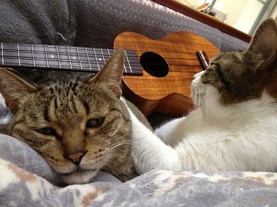 カマカとネコたち