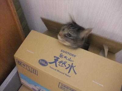 箱の中から①