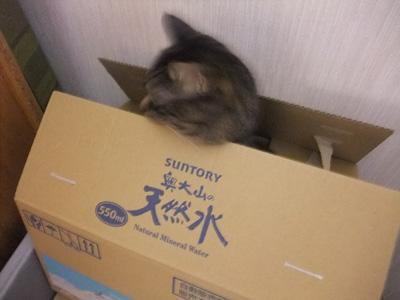 箱の中から②