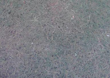 芝カットできた