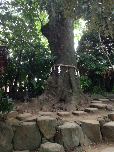 川越氷川神社3