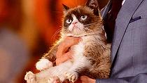 01-grumpy_cat-210x118.jpg