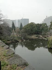 日比谷公園の鳥