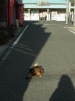 20131222東京湾フェリー~金谷 (24)