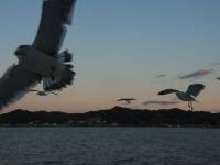 20131222東京湾フェリー~金谷 (50)