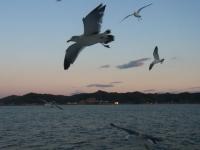 20131222東京湾フェリー~金谷 (52)