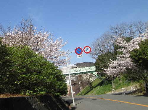 4g3sakura15.jpg