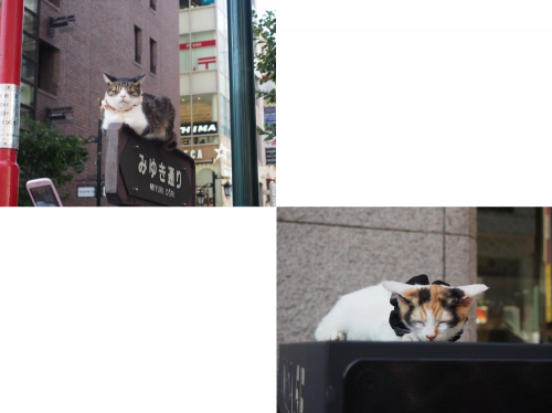 cat_convert_20140915072936.png