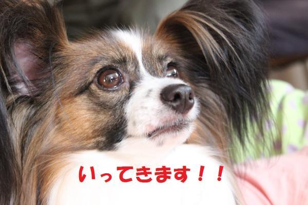 ittekimasu_convert_20140725073958.jpg