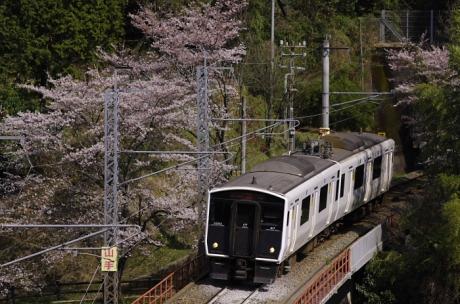 817桜_140327