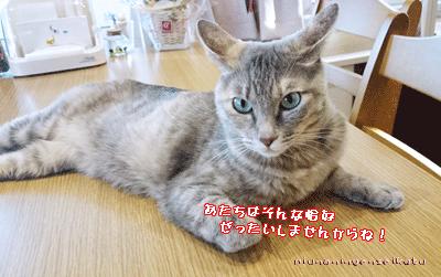 nekosyanchi201407254.png
