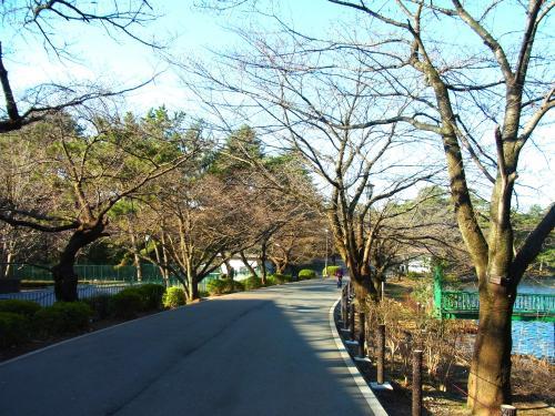 140323-202桜並木(S)