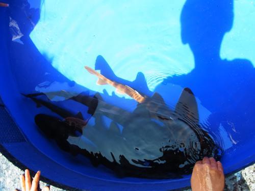 140504-122触れるサメ(S)