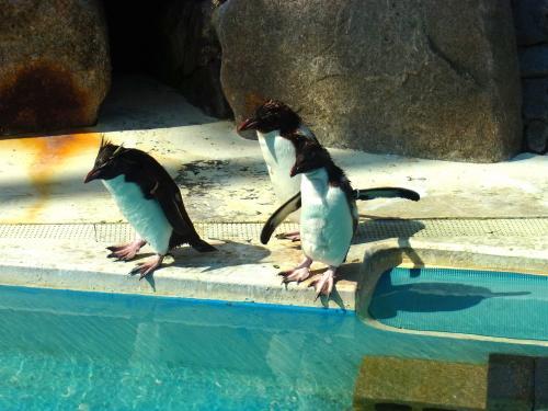 140504-124ペンギン(S)