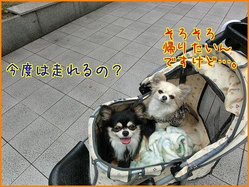 chayamachi (4)