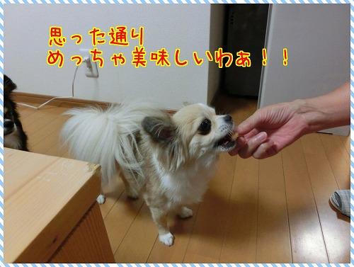 shokuba (5)
