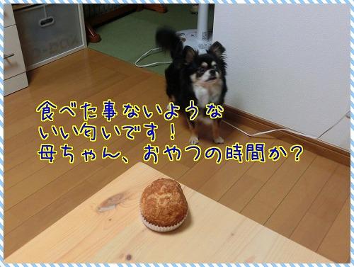 shokuba (6)