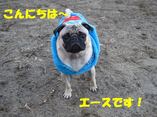 IMG_9381.jpg