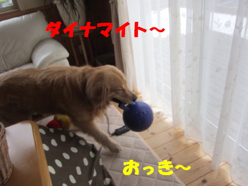 IMG_9641.jpg