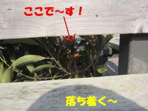 IMG_9919.jpg