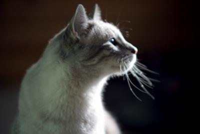 ネコ 王子様
