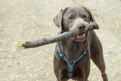 ほれやるよ 犬