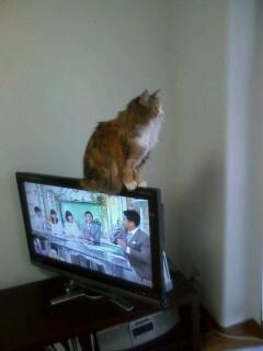 ネコ テレビ