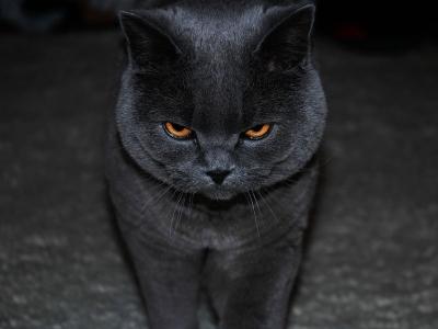 ネコ、怒る。