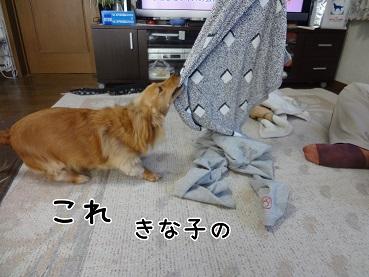 kinako56
