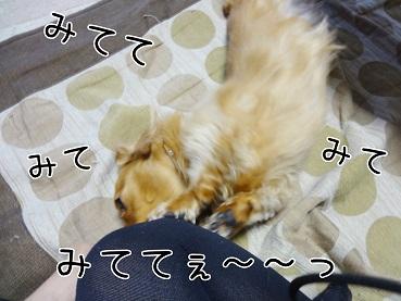 DSC01692.jpg