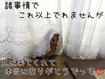 KINAKO4.jpg
