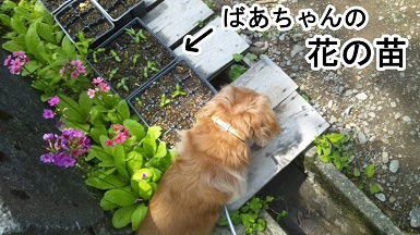 kinako100.jpg