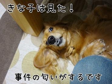 kinako104.jpg
