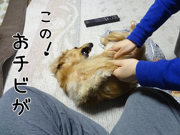 kinako107.jpg