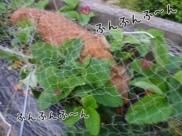 kinako111.jpg