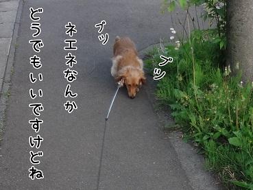 kinako117.jpg