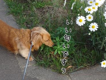 kinako118.jpg