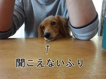 kinako12.jpg